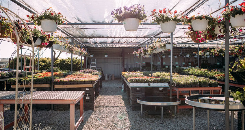 Back To Our Roots As An Illinois Wholesale Nursery   Green Glen Nursery, Inc
